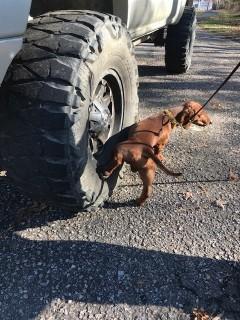 wrigley-tire