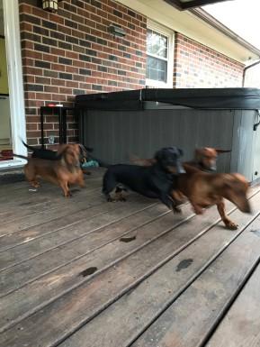 dogs-run-on-deck