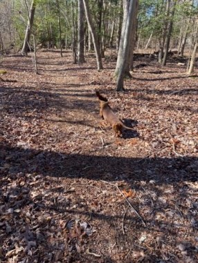 wrigley-run-woods